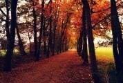 6 Passos financeiros a dar no outono
