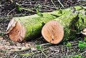 Limpeza de terrenos: conheça as regras, prazos e valor das multas