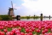 Trabalho na Holanda para Portugueses